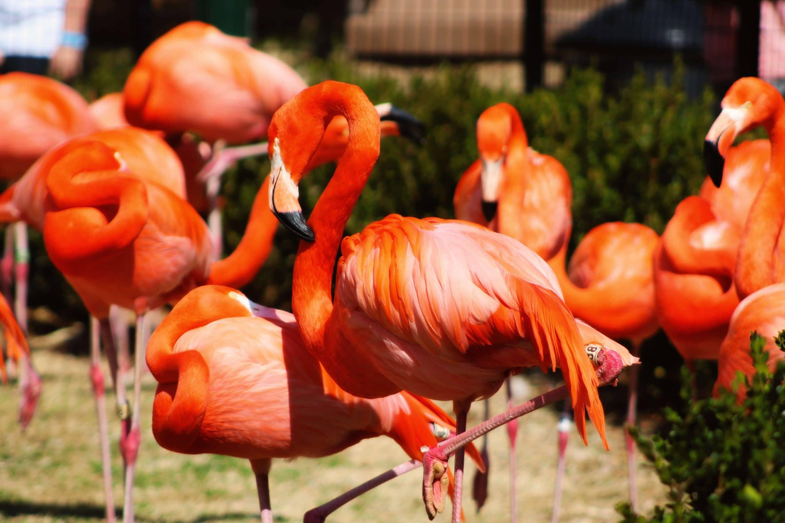 OKC Zoo events with True Sky